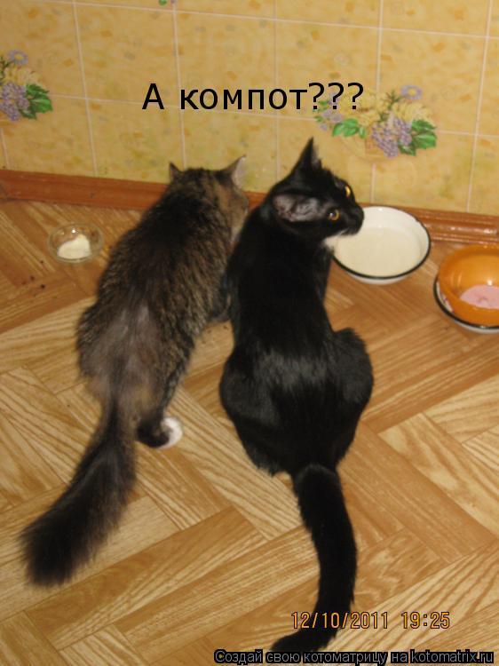 Котоматрица: А компот???