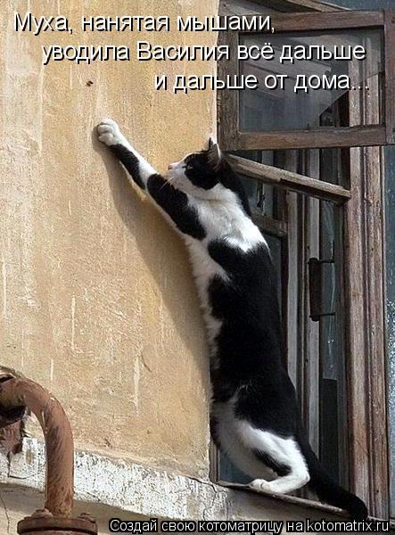 Котоматрица: Муха, нанятая мышами, уводила Василия всё дальше и дальше от дома...