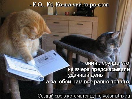 Котоматрица: - К-О.. Ко..Ко-ша-чий го-ро-скоп  - аййй.. ерунда это на вчера предсказывали  удачный день а за  обои нам все равно попало..