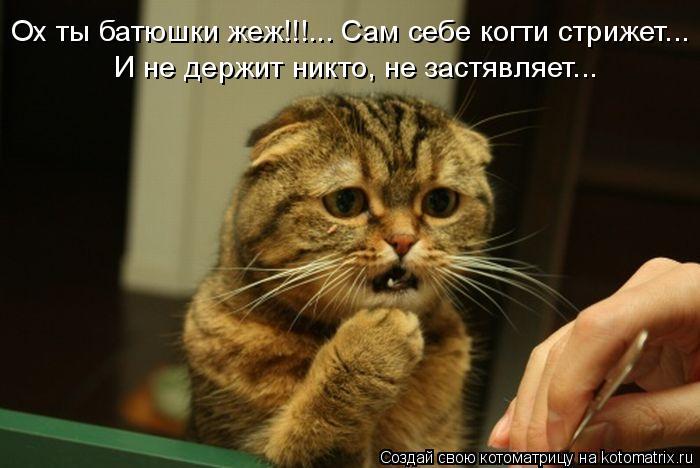 Котоматрица: Ох ты батюшки жеж!!!... Сам себе когти стрижет... И не держит никто, не застявляет...