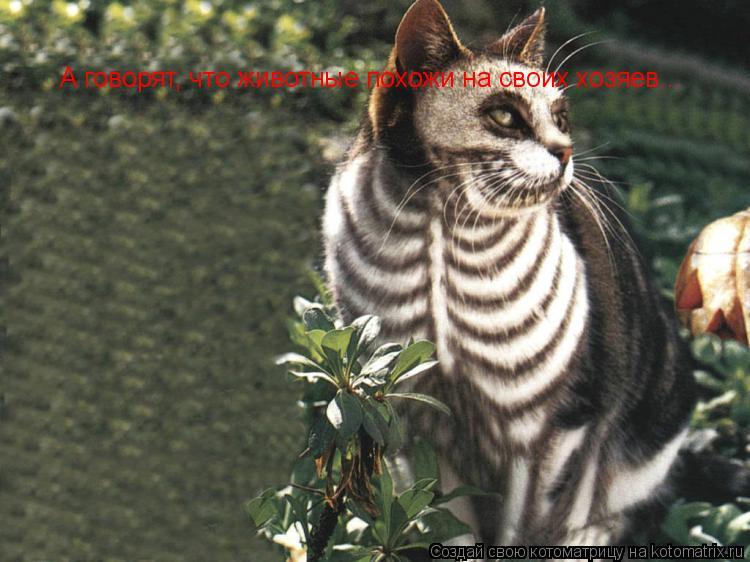 Котоматрица: А говорят, что животные похожи на своих хозяев...