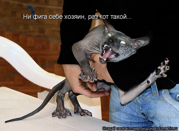 Котоматрица: Ни фига себе хозяин, раз кот такой...