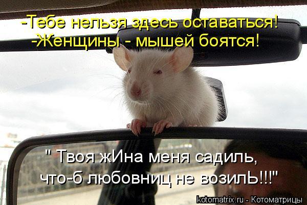 """Котоматрица: -Тебе нельзя здесь оставаться! -Женщины - мышей боятся! """" Твоя жИна меня садиль, что-б любовниц не возилЬ!!!"""""""