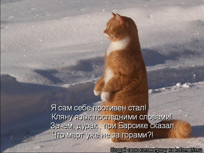 Котоматрица: Я сам себе противен стал! Кляну язык последними словами! Зачем, дурак , при Барсике сказал, Что март уже не за горами?!