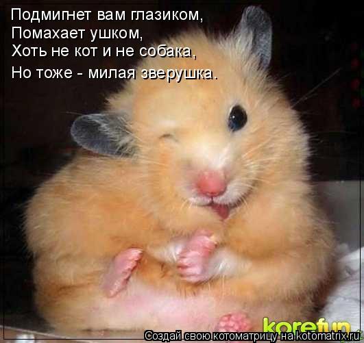 Котоматрица: Подмигнет вам глазиком, Помахает ушком, Хоть не кот и не собака, Но тоже - милая зверушка.