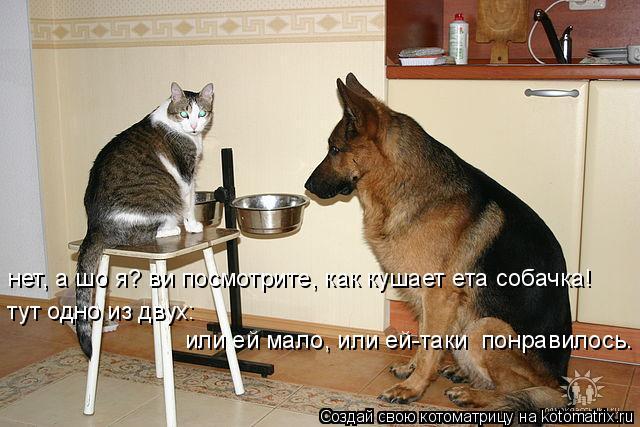 Котоматрица: а шо я? нет, ви посмотрите нет, а шо я? ви посмотрите, как кушает ета собачка! тут одно из двух: или ей мало, или ей-таки  понравилось.