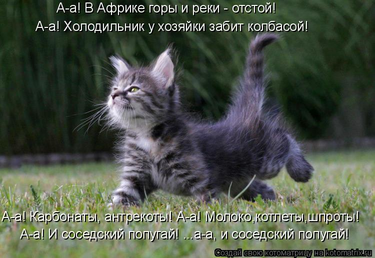 http://kotomatrix.ru/images/lolz/2011/12/16/1062904.jpg