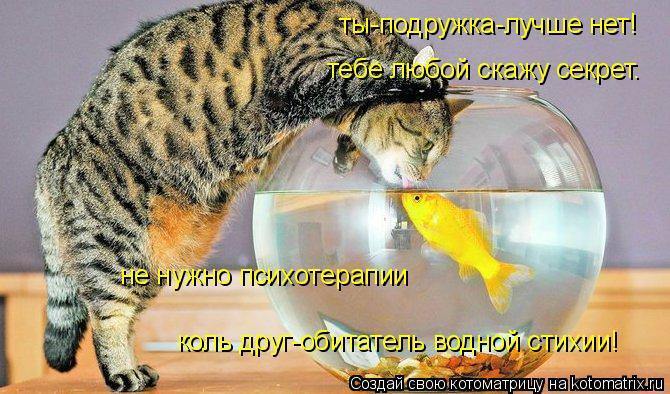 Котоматрица: ты-подружка-лучше нет! тебе любой скажу секрет. не нужно психотерапии коль друг-обитатель водной стихии!