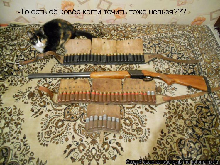 Котоматрица: -То есть об ковёр когти точить тоже нельзя???