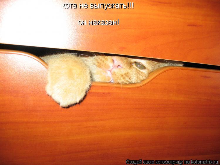 Котоматрица: кота не выпускать!!! он наказан!
