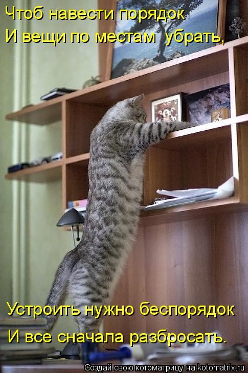 Котоматрица - Чтоб навести порядок И вещи по местам  убрать, Устроить нужно беспоряд