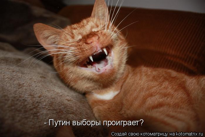 Котоматрица: - Путин выборы проиграет?