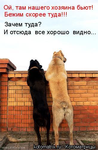 Котоматрица: Ой, там нашего хозяина бьют! Бежим скорее туда!!! Зачем туда? И отсюда  все хорошо  видно...