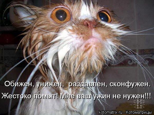 Котоматрица: Обижен, унижен,  раздавлен, сконфужен. Жестоко помыт! Мне ваш ужин не нужен!!!