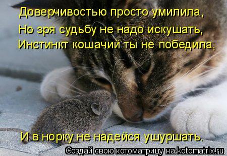 Котоматрица: Инстинкт кошачий ты не победила, И в норку не надейся ушуршать. Доверчивостью просто умилила, Но зря судьбу не надо искушать,