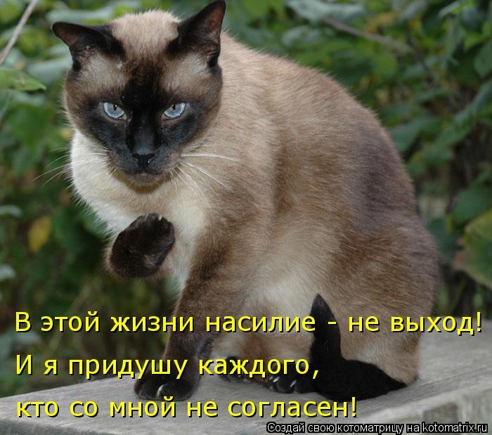 Котоматрица: В этой жизни насилие - не выход! И я придушу каждого, кто со мной не согласен!