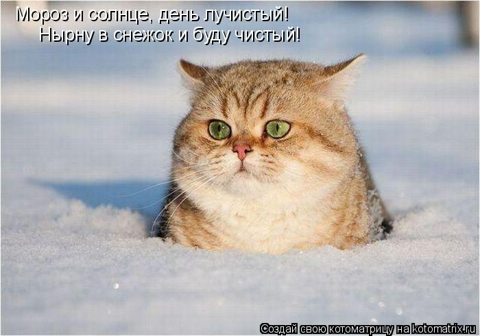 Котоматрица: Мороз и солнце, день лучистый! Нырну в снежок и буду чистый!
