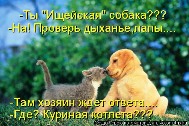 """Котоматрица: -Ты """"Ищейская"""" собака??? -Там хозяин ждет ответа.... -Где? Куриная котлета??? -На! Проверь дыханье,лапы...."""