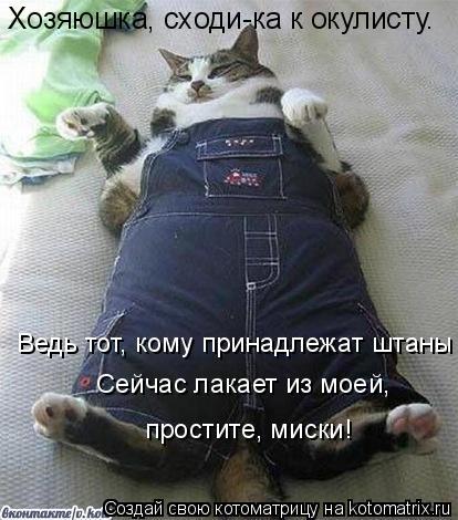 Котоматрица: Хозяюшка, сходи-ка к окулисту. Ведь тот, кому принадлежат штаны Сейчас лакает из моей, простите, миски!