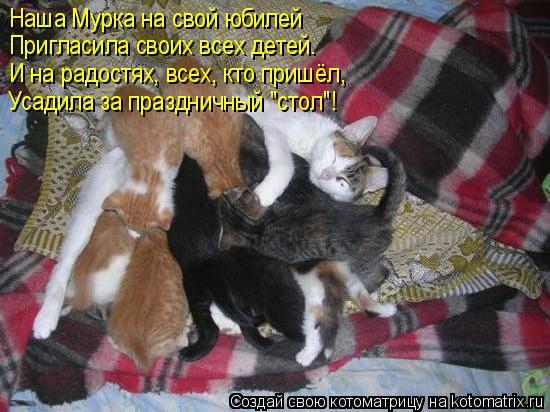 """Котоматрица: Наша Мурка на свой юбилей Пригласила своих всех детей. И на радостях, всех, кто пришёл, Усадила за праздничный """"стол""""!"""