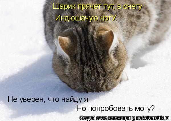 Котоматрица: Шарик прячет тут, в снегу Индюшачую ногУ. Не уверен, что найду я, Но попробовать могу?