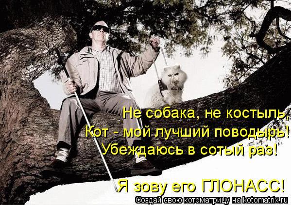 Котоматрица: Не собака, не костыль, Кот - мой лучший поводырь! Убеждаюсь в сотый раз! Я зову его ГЛОНАСС!