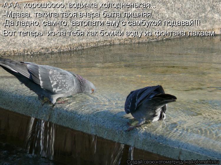 Котоматрица: -Мдааа, текила твоя вчера была лишняя, -ААА, хорошоооо, водичка холодненькая... Вот теперь  из-за тебя как бомжи воду из фонтана лакаем -Да ладн