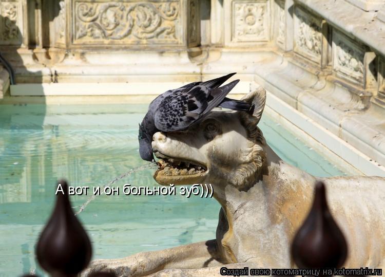 Котоматрица: А вот и он больной зуб))) А вот и он больной зуб)))