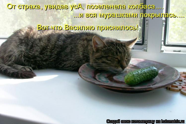 Котоматрица: От страха, увидав усА, позеленела колбаса.... ...и вся мурашками покрылась.... Вот что Василию приснилось!