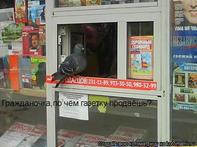 Котоматрица: Гражданочка,по чём газетку продаёшь?