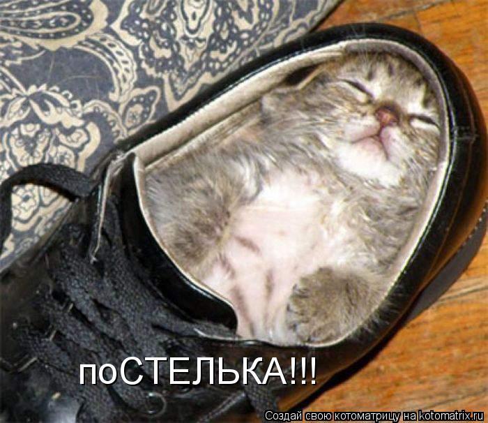 Котоматрица - поСТЕЛЬКА!!!