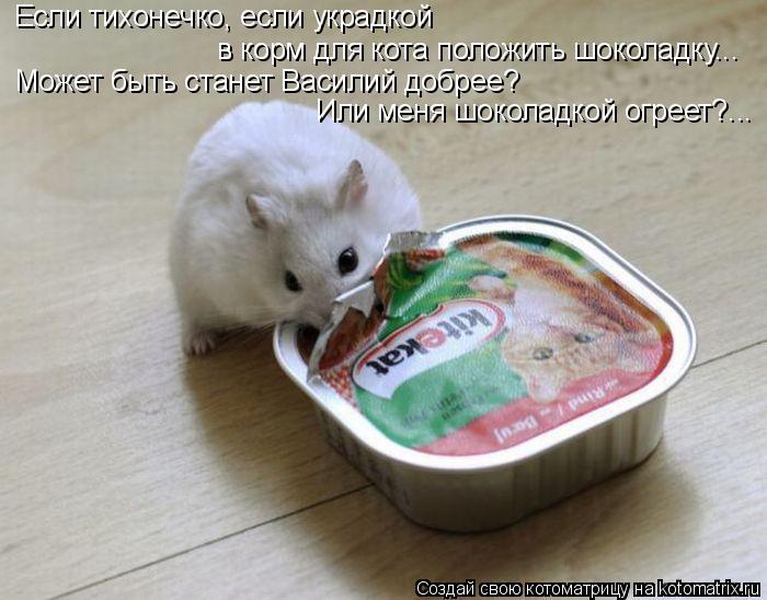 Котоматрица: Если тихонечко, если украдкой в корм для кота положить шоколадку... Может быть станет Василий добрее? Или меня шоколадкой огреет?...
