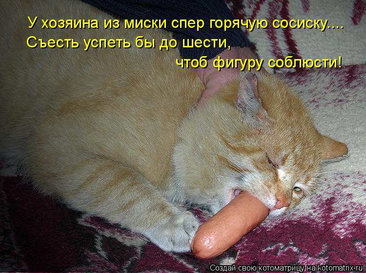 Котоматрица: У хозяина из миски спер горячую сосиску.... Съесть успеть бы до шести,  чтоб фигуру соблюсти! чтоб фигуру соблюсти!