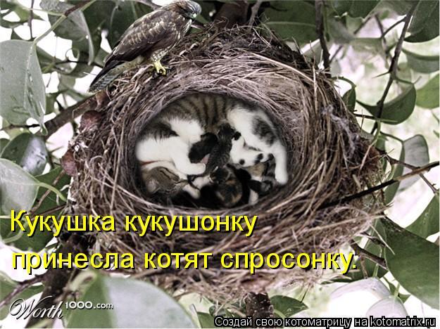 Котоматрица - Кукушка кукушонку принесла котят спросонку.