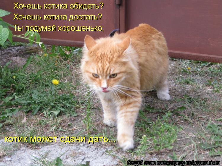 Котоматрица: Хочешь котика обидеть? Хочешь котика достать? Ты подумай хорошенько, котик может сдачи дать...