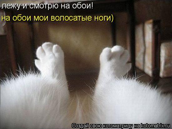 Котоматрица: лежу и смотрю на обои! на обои мои волосатые ноги)