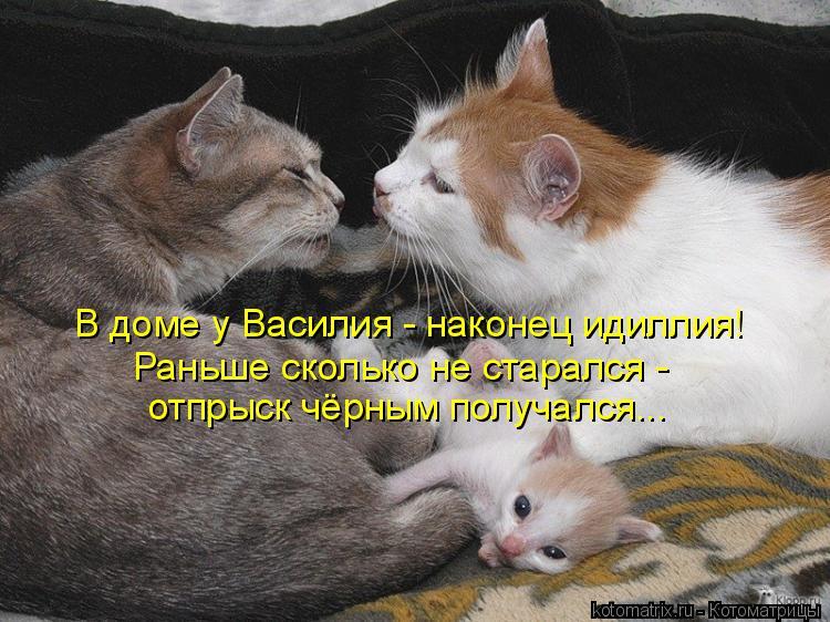 Котоматрица: В доме у Василия - наконец идиллия!  Раньше сколько не старался - отпрыск чёрным получался...