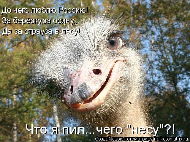 Котоматрица - До чего люблю Россию! За берёзку,за осину... Да за страуса в лесу! Что