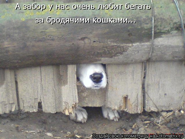 Котоматрица - А забор у нас очень любит бегать за бродячими кошками...