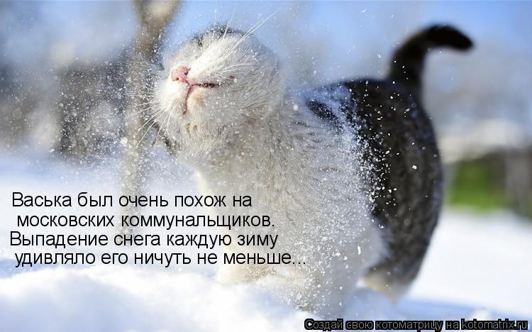 Котоматрица: Васька был очень похож на  московских коммунальщиков. Выпадение снега каждую зиму  удивляло его ничуть не меньше...