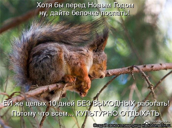 Котоматрица: Хотя бы перед Новым Годом ну, дайте белочке поспать! ЕЙ же целых 10 дней БЕЗ ВЫХОДНЫХ работать! Потому что всем... КУЛЬТУРНО ОТДЫХАТЬ