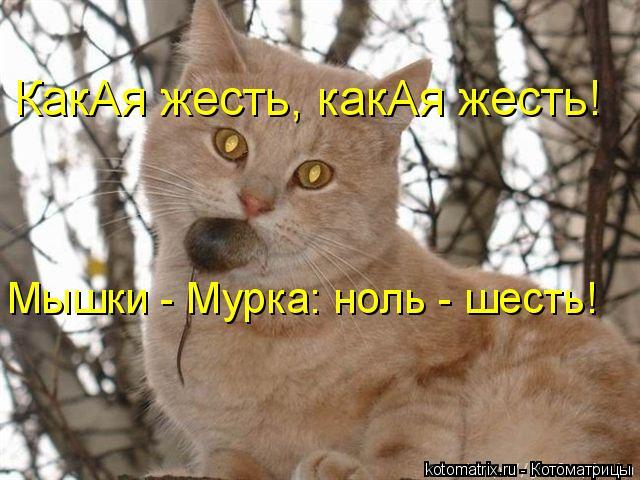 Котоматрица: КакАя жесть, какАя жесть! Мышки - Мурка: ноль - шесть!