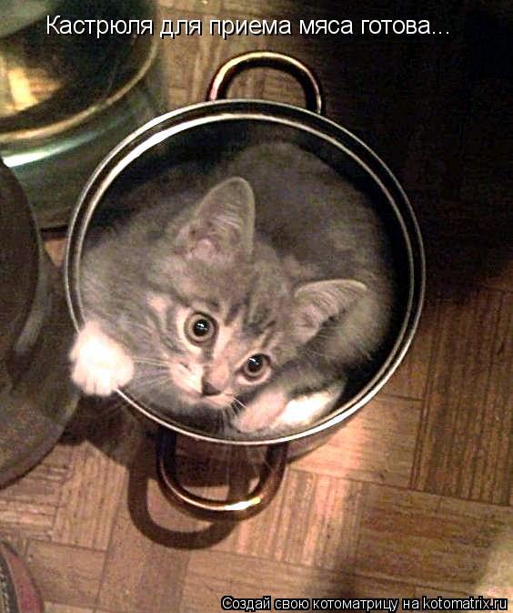 Котоматрица: Кастрюля для приема мяса готова...