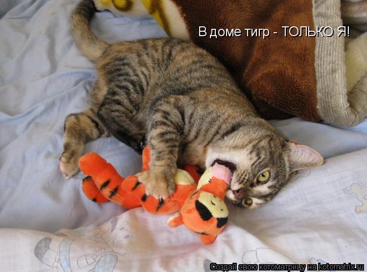 Котоматрица: В доме тигр - ТОЛЬКО Я!