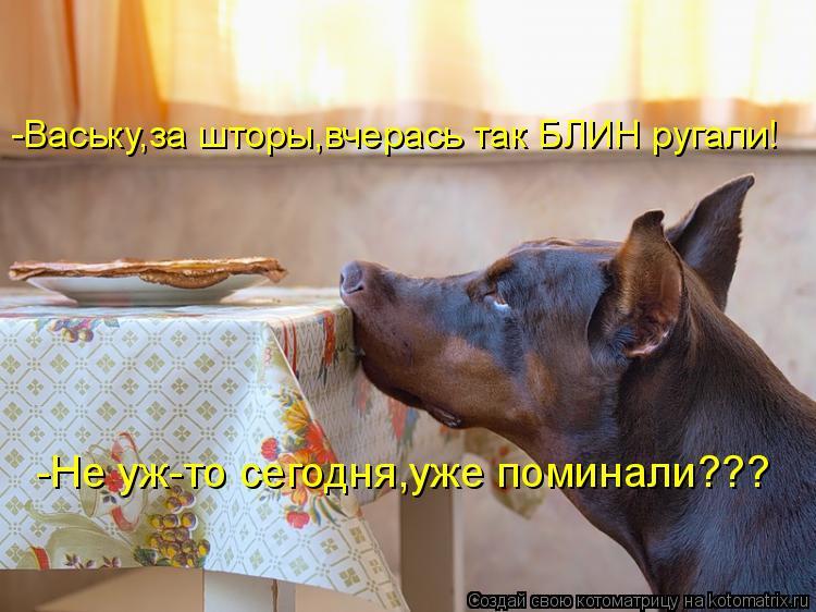 Котоматрица: -Ваську,за шторы,вчерась так БЛИН ругали! -Не уж-то сегодня,уже поминали???