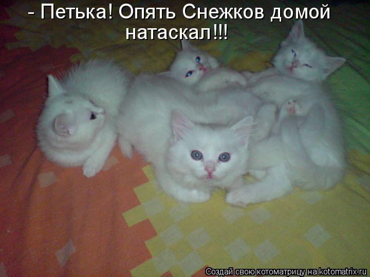 Котоматрица - - Петька! Опять Снежков домой натаскал!!!