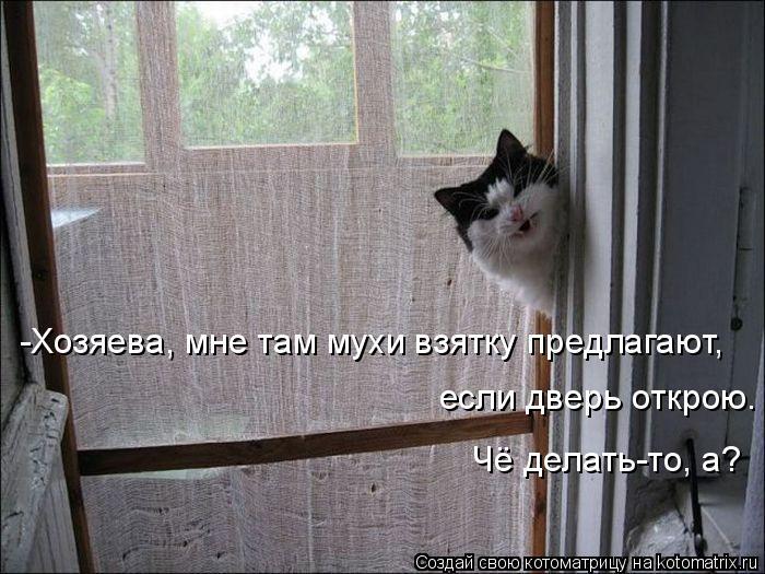 Котоматрица: -Хозяева, мне там мухи взятку предлагают, если дверь открою. Чё делать-то, а?