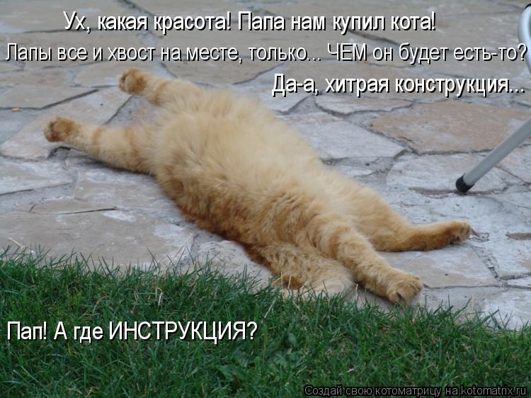Котоматрица: Ух, какая красота! Папа нам купил кота! Лапы все и хвост на месте, только... ЧЕМ он будет есть-то? Да-а, хитрая конструкция... Пап! А где ИНСТРУКЦИ