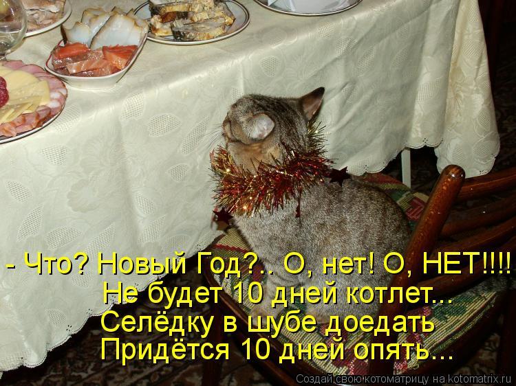 Котоматрица - - Что? Новый Год?.. О, нет! О, НЕТ!!!! Не будет 10 дней котлет... Селё