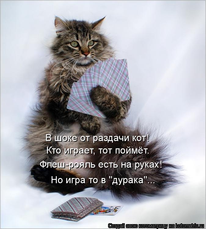 "Котоматрица: Кто играет, тот поймёт. Флеш-рояль есть на руках! В шоке от раздачи кот! Но игра то в ""дурака""..."